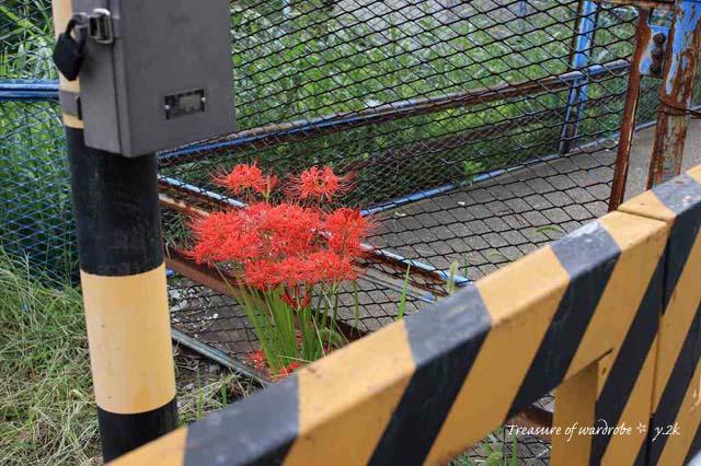 触るとバチが当たるってホント? 因みに写真は国鉄 新小岩~金町までの貨物線の踏切です 場所は亀有警察の裏手です。